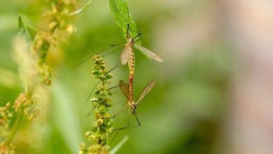 zanzare, rimedi naturali e soluzioni per tenerle alla larga
